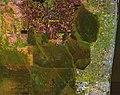 USGS Northern Everglades image 2001.jpg