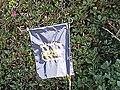 USS Hampton lawn flag.jpg