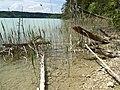 Uferweg von der Blauen Gumpe zum großen Ostersee Uferzone.jpg
