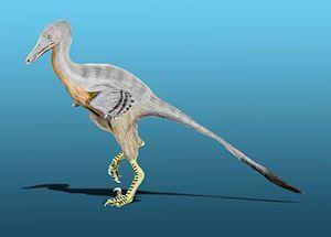 Unenlagia - Restoration of U. comahuensis.