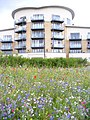 Urban Regeneration on Windsor Esplanade - geograph.org.uk - 1423512.jpg