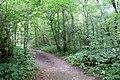 Urquhart Bay Woods, Drumnadrochit - geograph.org.uk - 1441648.jpg