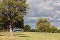 Vägen till Etosha-5488 - Flickr - Ragnhild & Neil Crawford.jpg