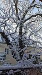 Valentinhaus-Gärten im Winter 06.jpg