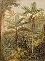 Vegetação tropical (atribuído), da Coleção Brasiliana Iconográfica.jpg