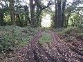 Vehicle track off lane to Bowden - geograph.org.uk - 1507602.jpg