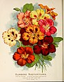 Vick's garden and floral guide (1898) (14763044972).jpg