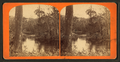 View of swamp along Oklawaha River, Fla, from Robert N. Dennis collection of stereoscopic views 2.png