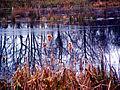 Vinter-reflektion - panoramio.jpg