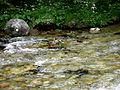 W Tatrach - Enlarge - panoramio.jpg