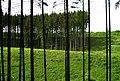 Wald-Krimmel.JPG