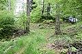 Wald DSC2736.jpg
