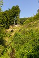 Wald hinter der Kartause Mauerbach, 26.08.2017.jpg