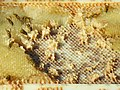 Wasps on a honeycomb (10500964753).jpg