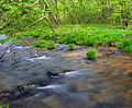 West Branch Pine Creek Flow.jpg
