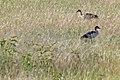 Western Serengeti 2012 06 03 3673 (7557824688) (2).jpg