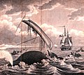 Whaling-dangers of the whale fishery.jpeg