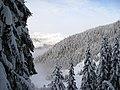 Whistler trees (2209479260).jpg