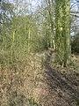 Whitmarsh Lane - geograph.org.uk - 1238035.jpg