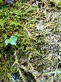 WikiProjekt Landstreicher Geotop Scheidegger Wasserfälle 30.jpg