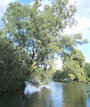 Willows on lake shore - geograph.org.uk - 551617.jpg