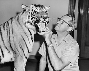 Taxidermy - Wilmer W. Tanner with a mounted tiger at the Brigham Young University Life Sciences Museum
