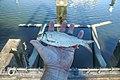 Winde in de hand gevangen met een hengel in de haven in Spijkenisse.jpg