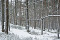 Winter in Loenen (5464943262).jpg