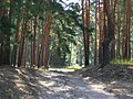 Wood way - panoramio.jpg