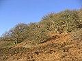 Wooded hillside - geograph.org.uk - 298239.jpg
