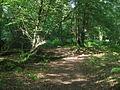 Woodland path in Dering Wood - geograph.org.uk - 1428123.jpg