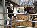 Woodmansee Farms in Preston (8185542875).jpg