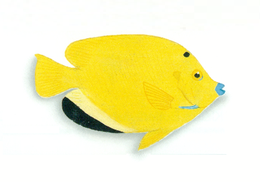 XRF-Apolemichthys trimaculatus
