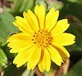 Yellow (30550830371).jpg