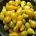 Yellow Pear Tomatoes 012.jpg