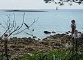 Yucca flaccida plage Saint-Philibert, Morbihan..jpg