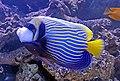 Zootopia aquarium 2.jpg