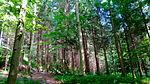 Zurich Wilderness Park.JPG