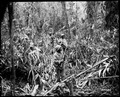 """Cautiously advancing through the jungle, while on patrol in Japanese territory off the Numa-Numa Trail, this member of - NARA - 531184.tif"