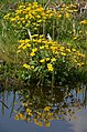 """Flowerpower"" at Schellingwoude Amsterdam - panoramio.jpg"
