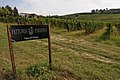 """ 09 - ITALY - Vineyard and signs Emilia Romagna wine - Mollino.jpg"