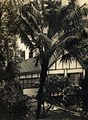 'Tree Fringed Home' RAHS-Osborne Collection (14182506434).jpg