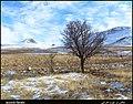 (((تنهایی))) - panoramio.jpg