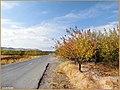 (((مناظر پاییزی از روستای قاسم خان ))) - panoramio (2).jpg