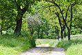 (3) frisches Grün im Donnbachtal.jpg