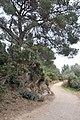 Île de Porquerolles, Hyères, Provence-Alpes-Côte d'Azur, France - panoramio (9).jpg
