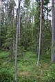 Överbo urskog-3.jpg