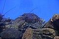 "Аквариум в павильоне ""Москвариум"", ВВЦ, Москва - panoramio (14).jpg"