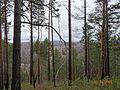 Вид с горы - panoramio (17).jpg