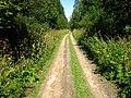 Дорога в парке Зверинец - panoramio (1).jpg